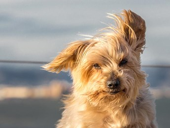 Dog stare in side wind